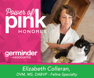 Power-of-Pink_Colleran_graphic
